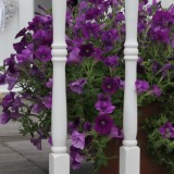 mammaloewagen zomerse bloeiers op de grote veranda