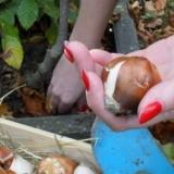 alexandra alphenaar plant bloembollen bij haar 'doe wat je hart je zegt' magnolia buitengoed de gaard