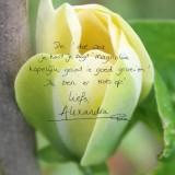 alexandra alphenaar plant magnolia bij buitengoed de gaard