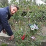 barry atsma snoeit (april 2015) de vlinderstruik geplant door vlinder, merlijn en isa hoes voor antonie bij buitengoed de gaard paasmaandag 06-04-2015