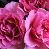 dag bloemen... wleterusten bij buitengoed de gaard buitengoed de gaard