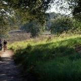 de meinweg mooi gebied voor wandelaars arny raeds