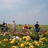 fietsers en rozen lottum