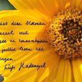 hadewych minis' wens voor haar zonnebloemen bij buitengoed de gaard