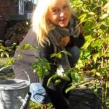 johanna ter steege plant 'de gelukkigste roos' tijdens haar verblij f in de pipowagendeluxe bij buitengoed de gaard