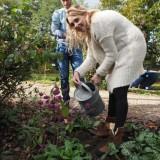 parelmoerbesstruik wateren het het planten door jelka van houten bij buitengoed de gaard