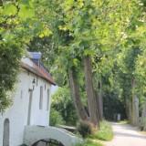 thorn maasgouw onder de bomen foto vvv midden-limburg