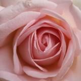 roos aspects of love geplant door lone van roosendaal. maaike widdershoven en rene van kooten bij buitengoed de gaard heythuysen