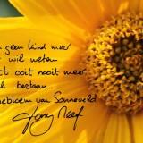 lieve groet van tony neef bij het planten van zijn sonnebloem langs  het tuinpad van mijn vader buitengoed de gaard