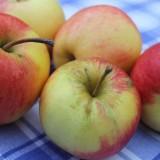 één van de  mooiste liedjes van toon hermans...  'appels op de tafelsprei'